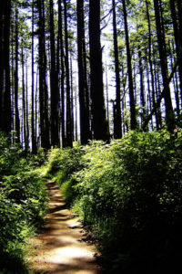 trail-through-the-forest-1514617